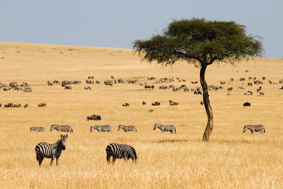 BOTSWANA: AFRIKAS GÖMDA JUVEL