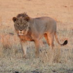 SAFARI I ZIMBABWE – PUT IT ON YOUR BUCKET LIST!