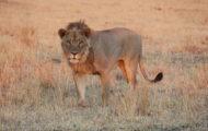 SAFARI I ZIMBABWE – PUT IT ON YOUR BUCKET LIST!